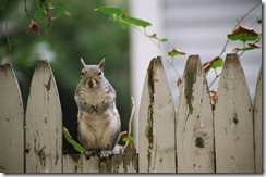 Good neighbors make good fences